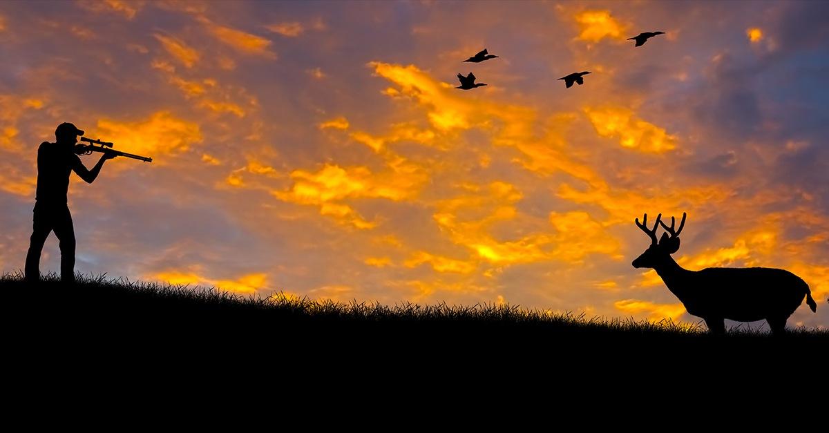 Daños causados por animales y los cotos de caza
