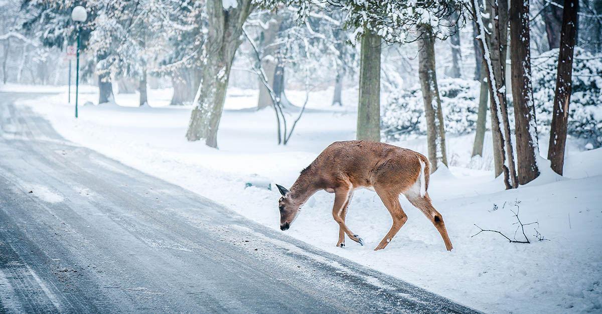 Lesiones por animales en carretera